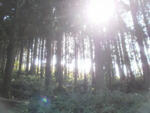 山林の写真
